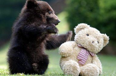 v-kieve-projdet-festival-igrushechnyx-medvedej