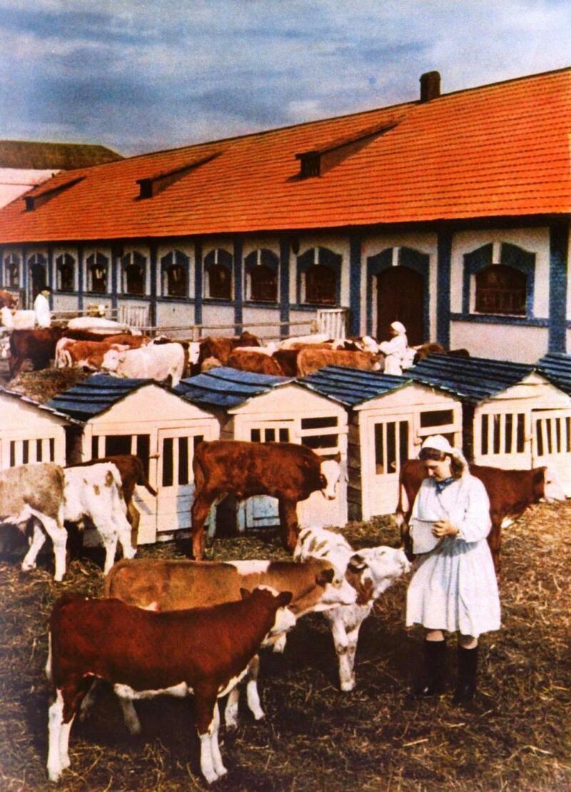 ussr-v-zhurnale-ogonyok-1950-61-17
